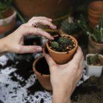 Organiczne nawozy najkorzystniejsze dla gleb!
